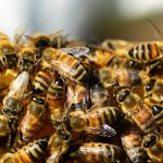 An Excruciating Sweetness: Lessons from Bees